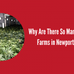 Why Are There So Many Cannabis Farms in Newport Homes